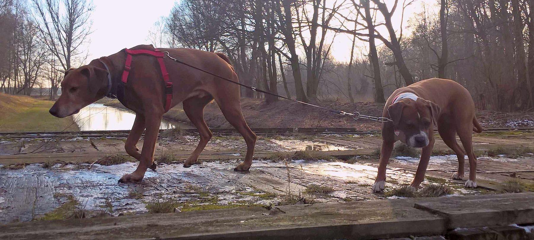 Hunde-Hof Wald & Wiese