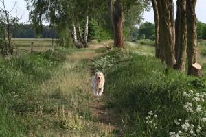 Hunde3
