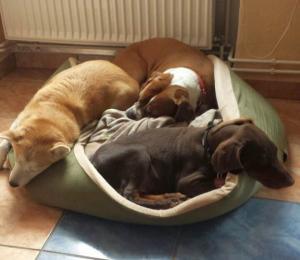drei Hunde im Korb